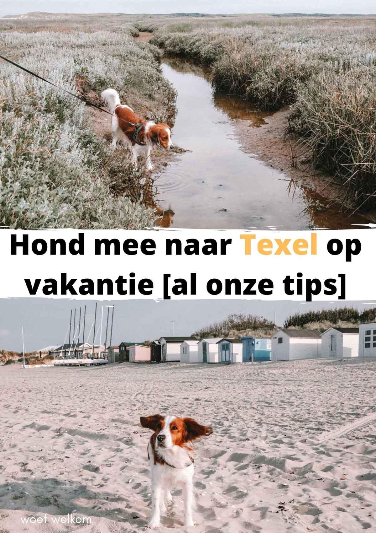 Hond mee naar Texel op vakantie [al onze tips]