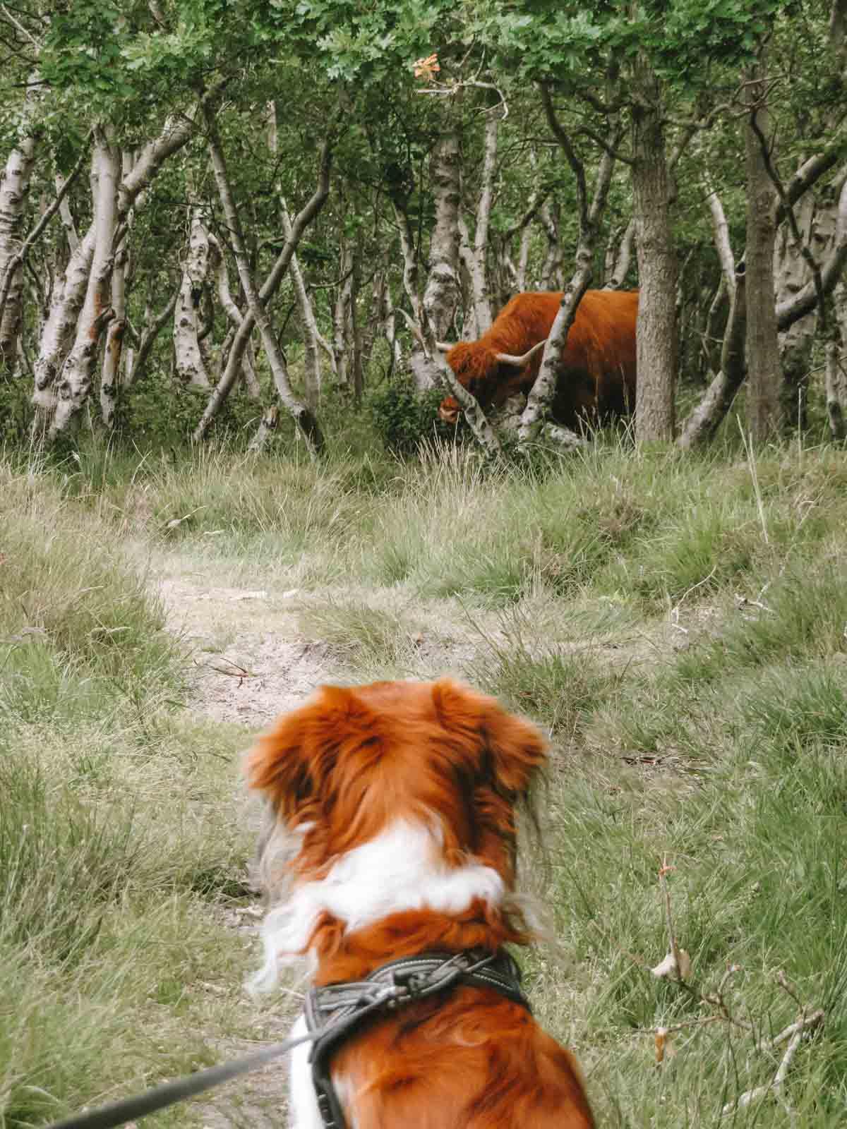 Hond mee naar Texel [al onze tips]