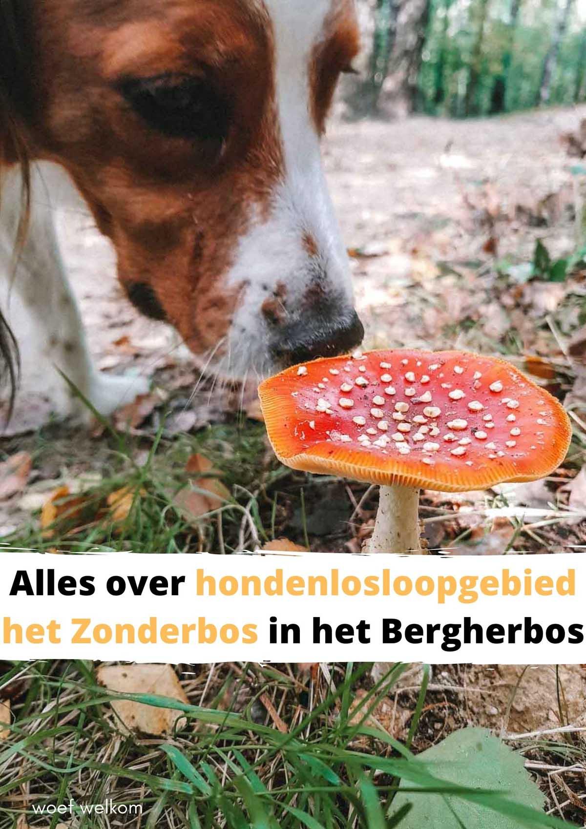 Alles over hondenlosloopgebied het Zonderbos in het Bergherbos