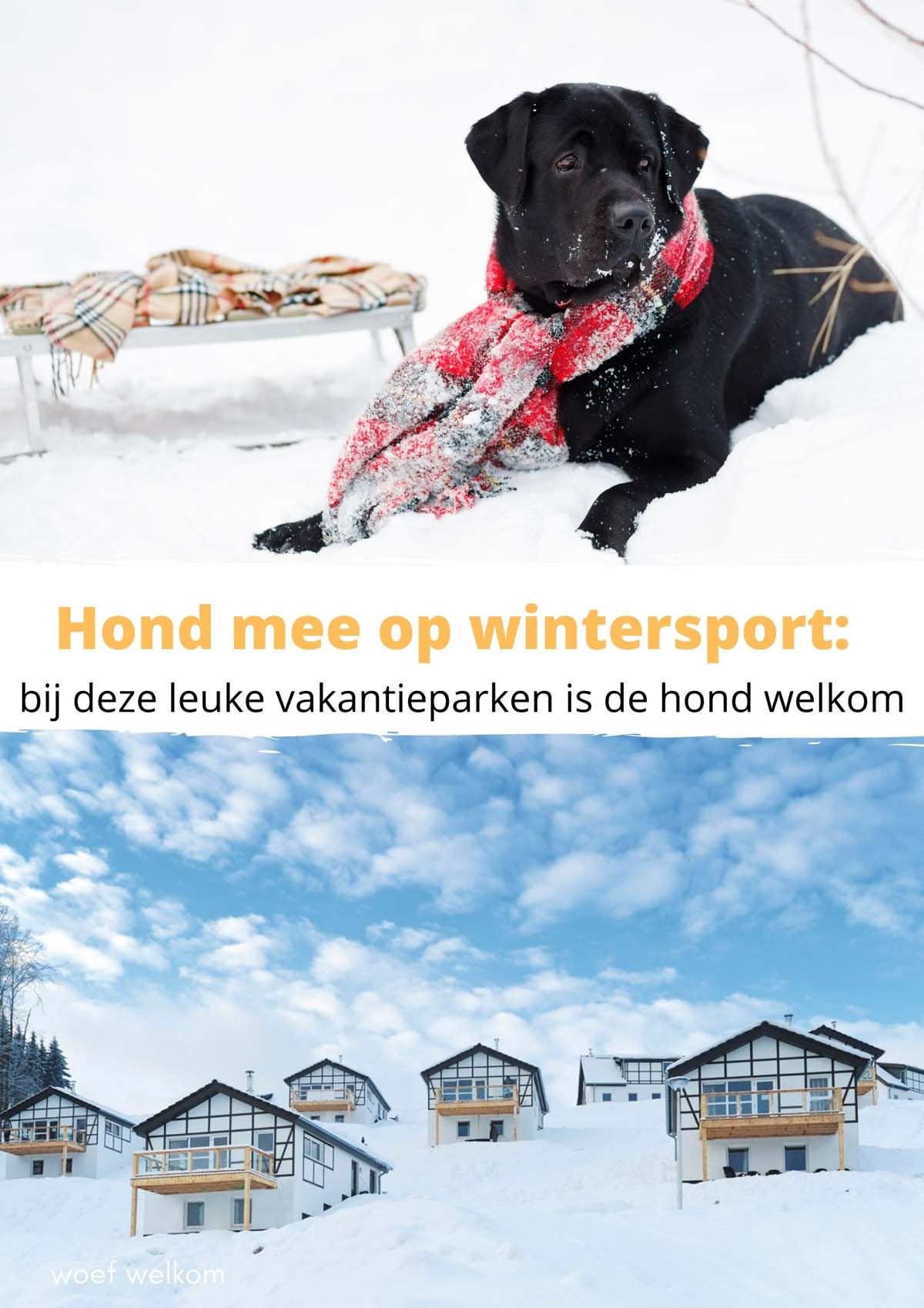 Hond mee op wintersport: bij deze leuke vakantieparken is de hond welkom