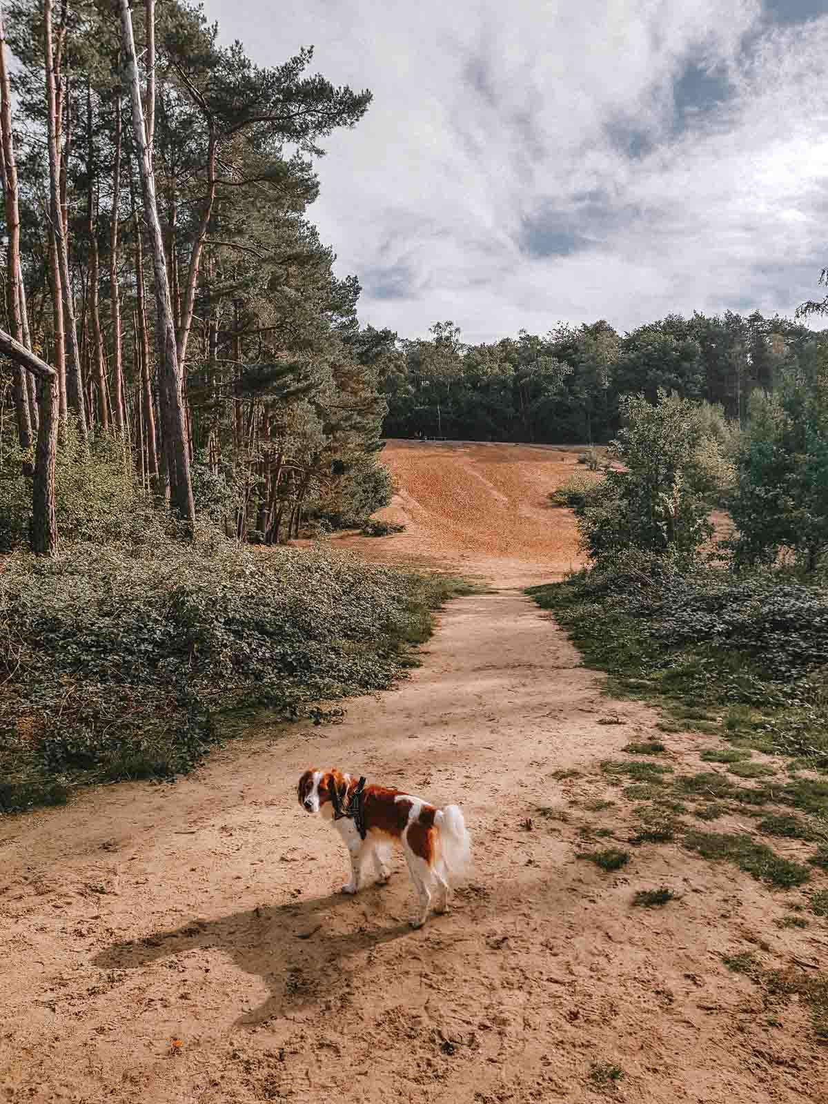 Hondenlosloopgebied het Zonderbos in het Bergherbos