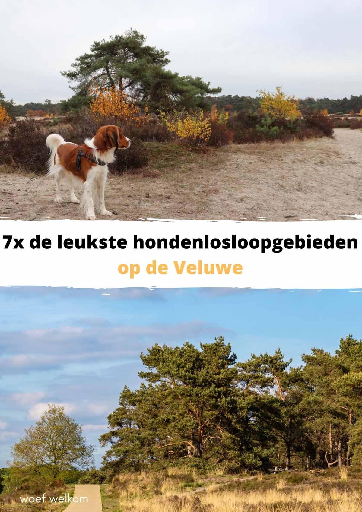 7x de leukste hondenlosloopgebieden op de Veluwe