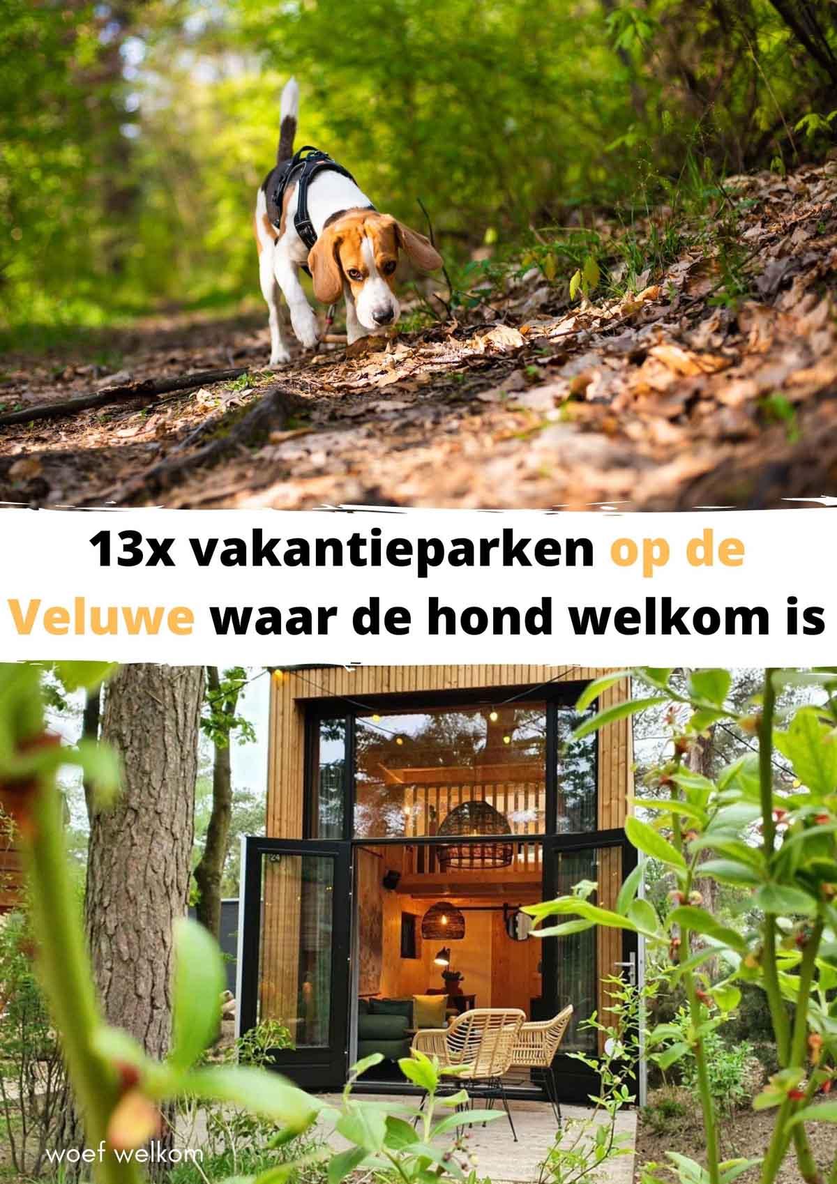 vakantieparken op de Veluwe waar de hond welkom is